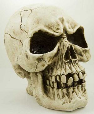 Large Skull Natural Poly Resin