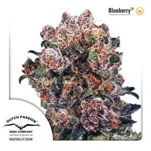 Blueberry 3pk