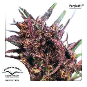Purple #1 3pk
